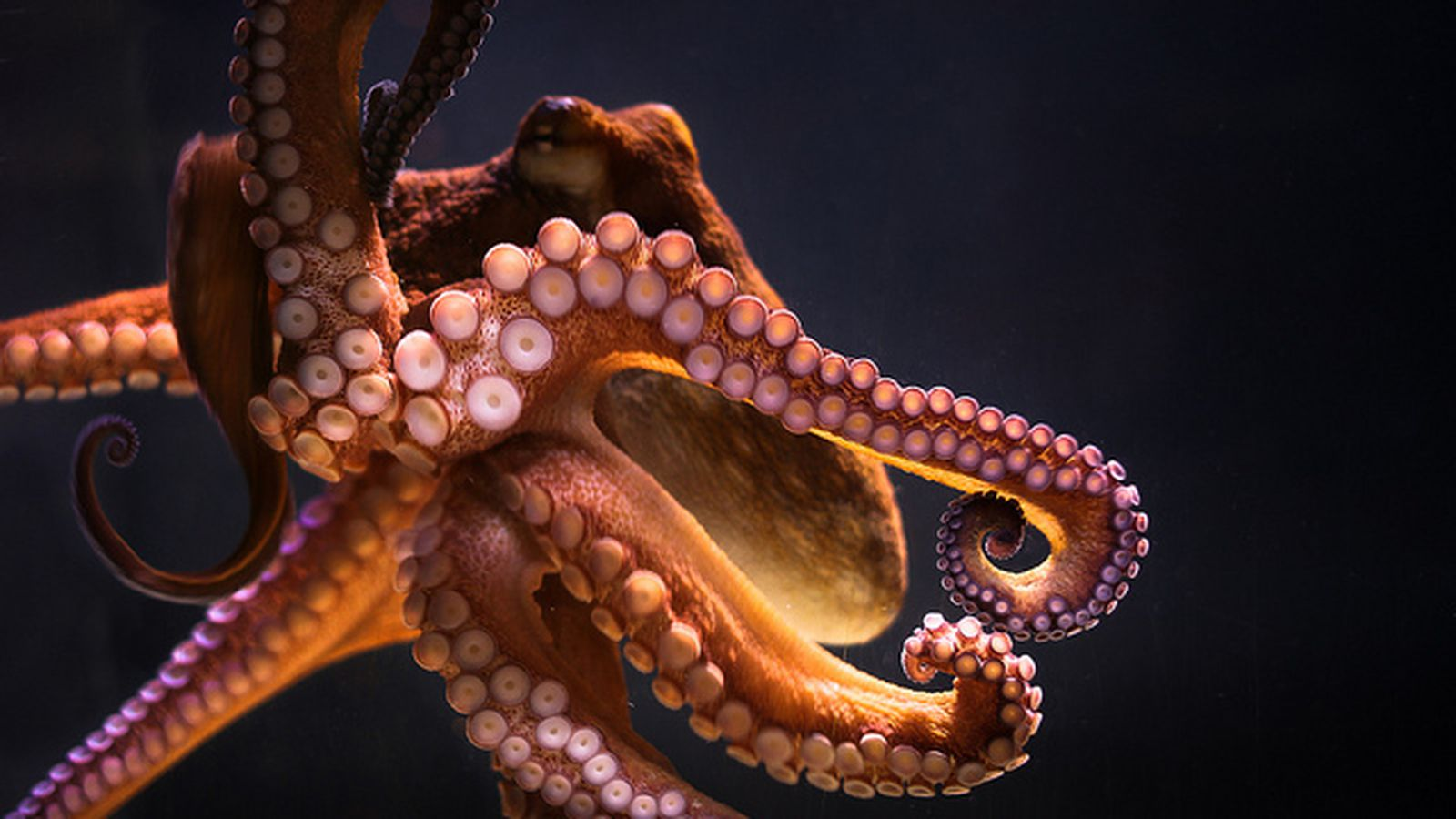 Together Energy Reviews >> Science explains why octopus arms don't stick together ...