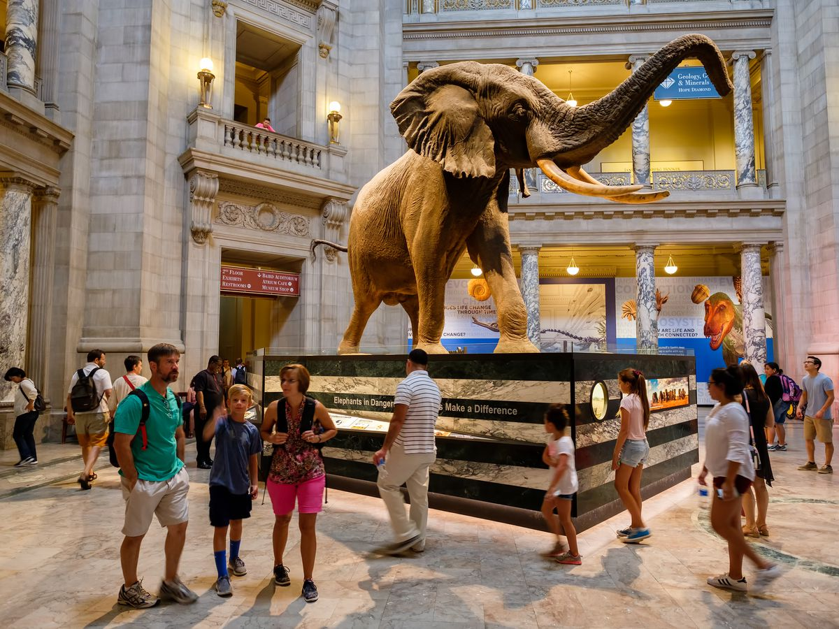 People stand in front a large statue of an elephant in the Main Hall of the National Museum of Natural History in Washington D.C.