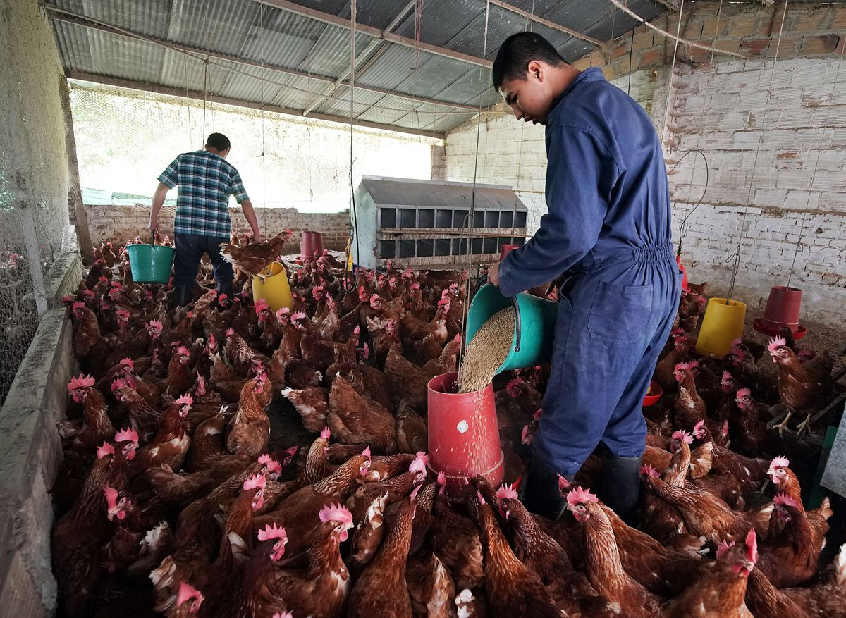 Patients feed chickens at the Fundacion Nina Maria in Alban, Colombia, on Friday, Aug. 23, 2019.