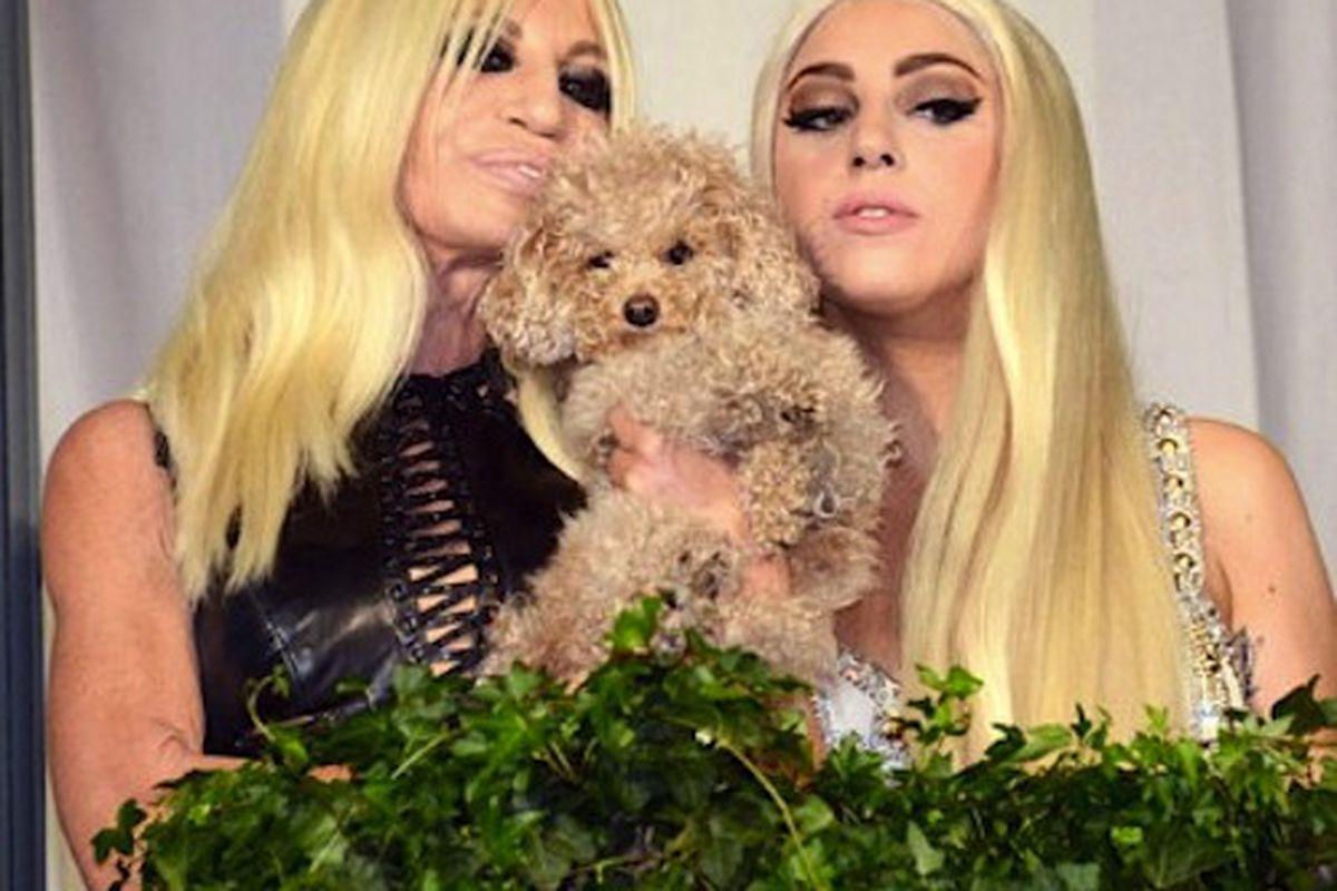 "Photo via <a href=""http://fashion.telegraph.co.uk/columns/olivia-bergin/TMG9580856/Lady-Gaga-Donatella-Versace-and-Fozzi-Bear-hang-out-in-Milan.html"">Telegraph</a>"