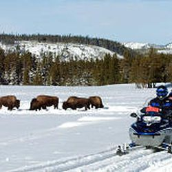 Snowmobilers stop near bison in Yellowstone in 2003. Parks are likely to allow snowmobiles at least next three winters.