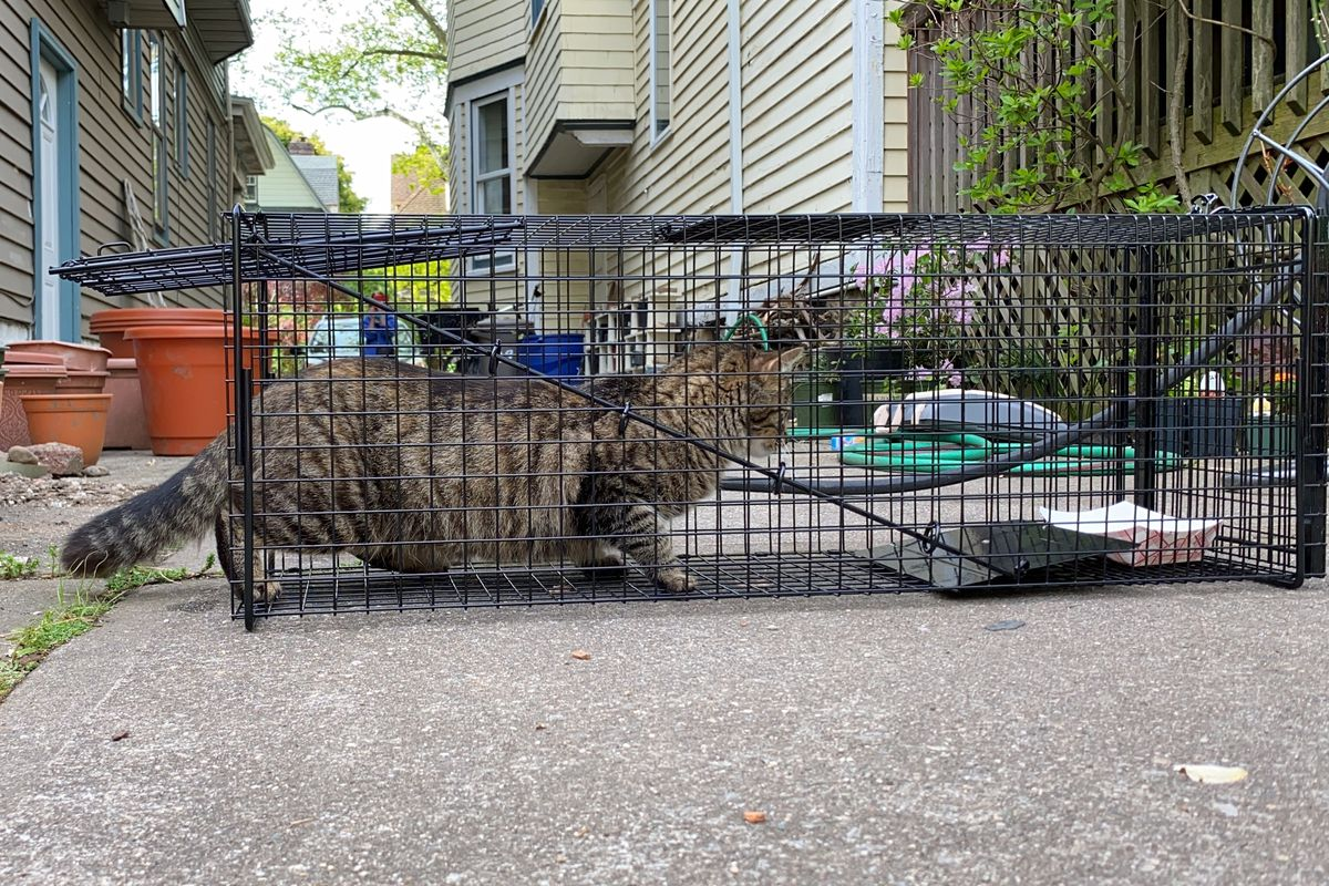 A cage used to capture cats for the trap-neuter-return process.