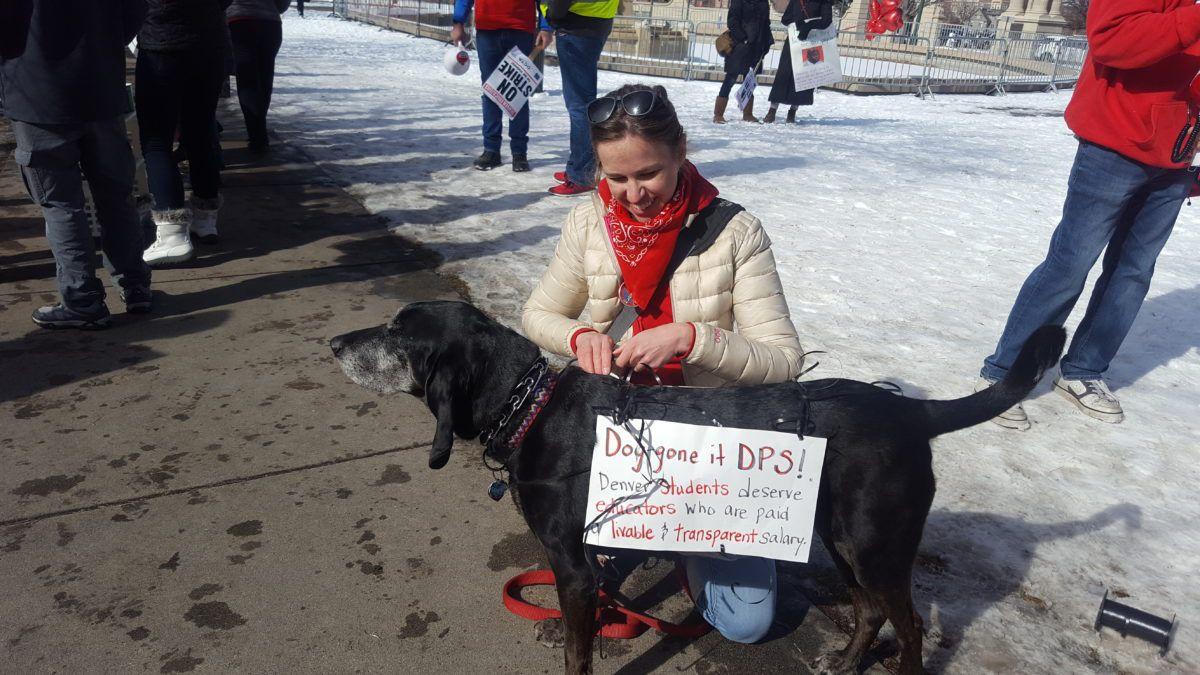 Emily Barthel, a Denver teacher, secures a strike sign on her dog Fern.