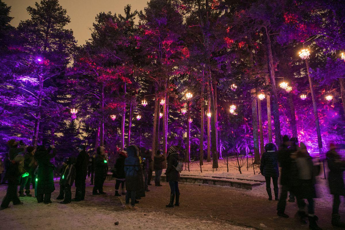 The Morton Arboretum's Illumination — Tree Lights celebration.