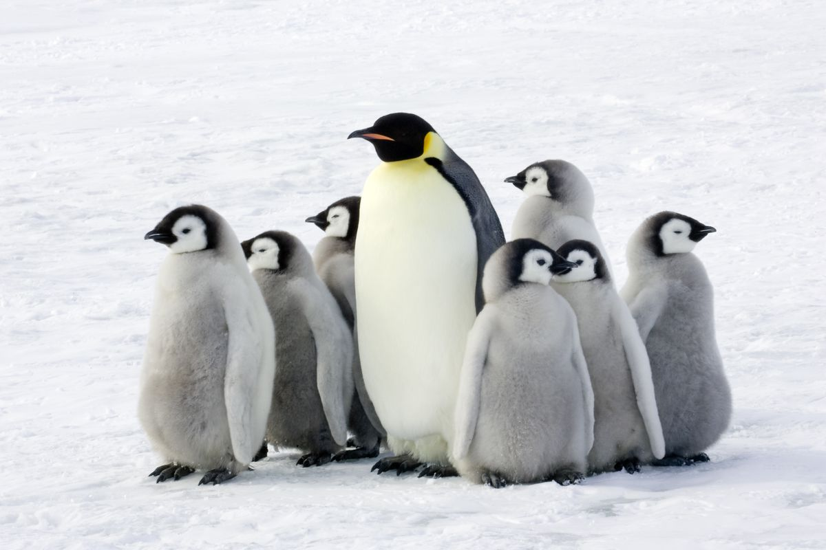penguin - photo #17