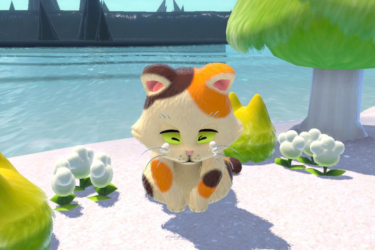 A mama cat cries on a beach