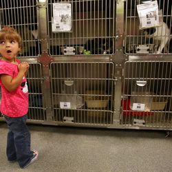 Cambrie Moore looks at cats to adopt at the West Valley City Animal Shelter in West Valley City on Saturday, Sept. 1, 2012.