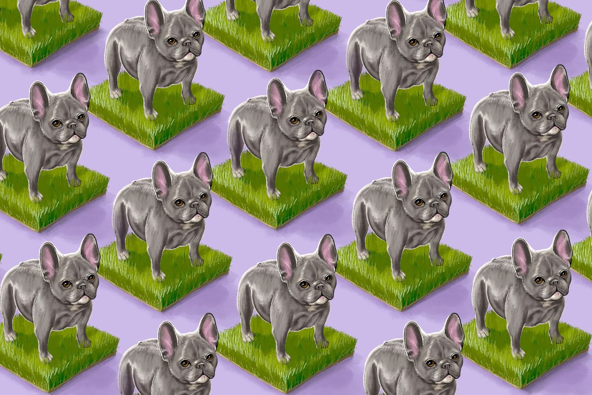 A wallpaper-type illustration of many French bulldogs.
