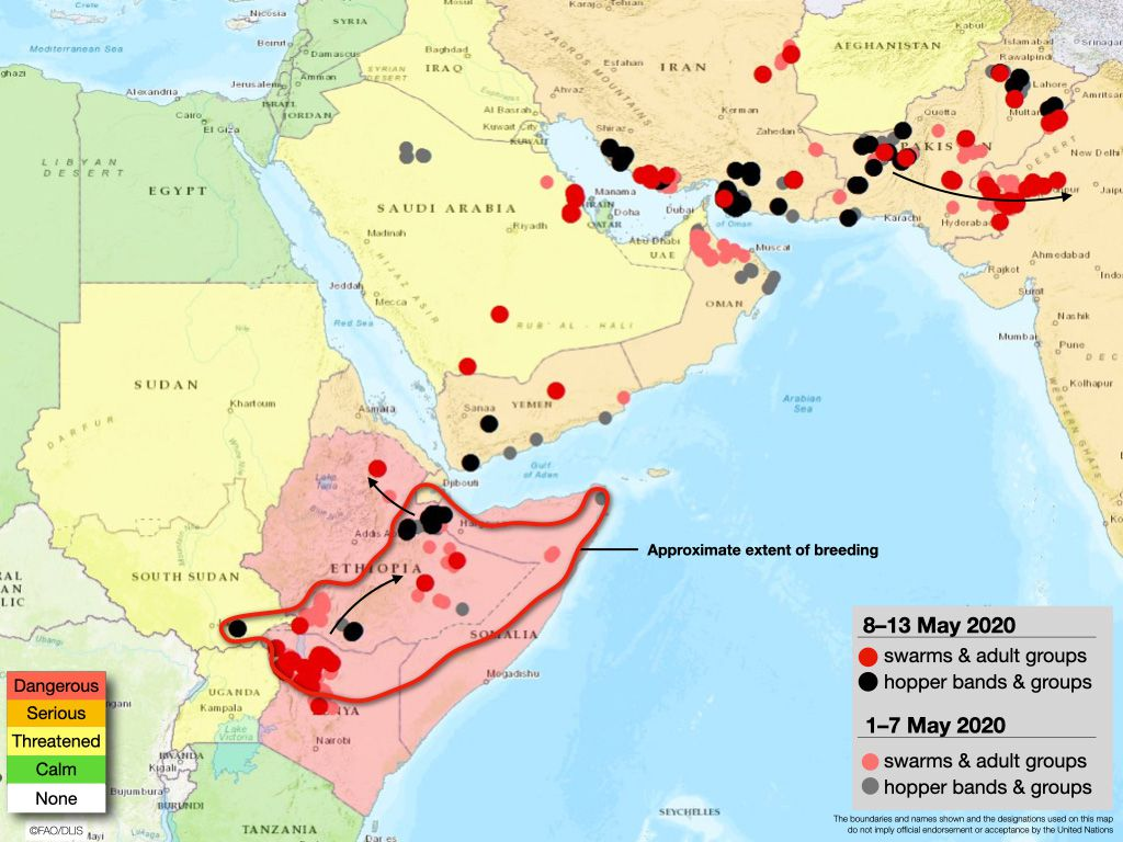 A map showing the forecast of locust swarms in Africa and Asia.