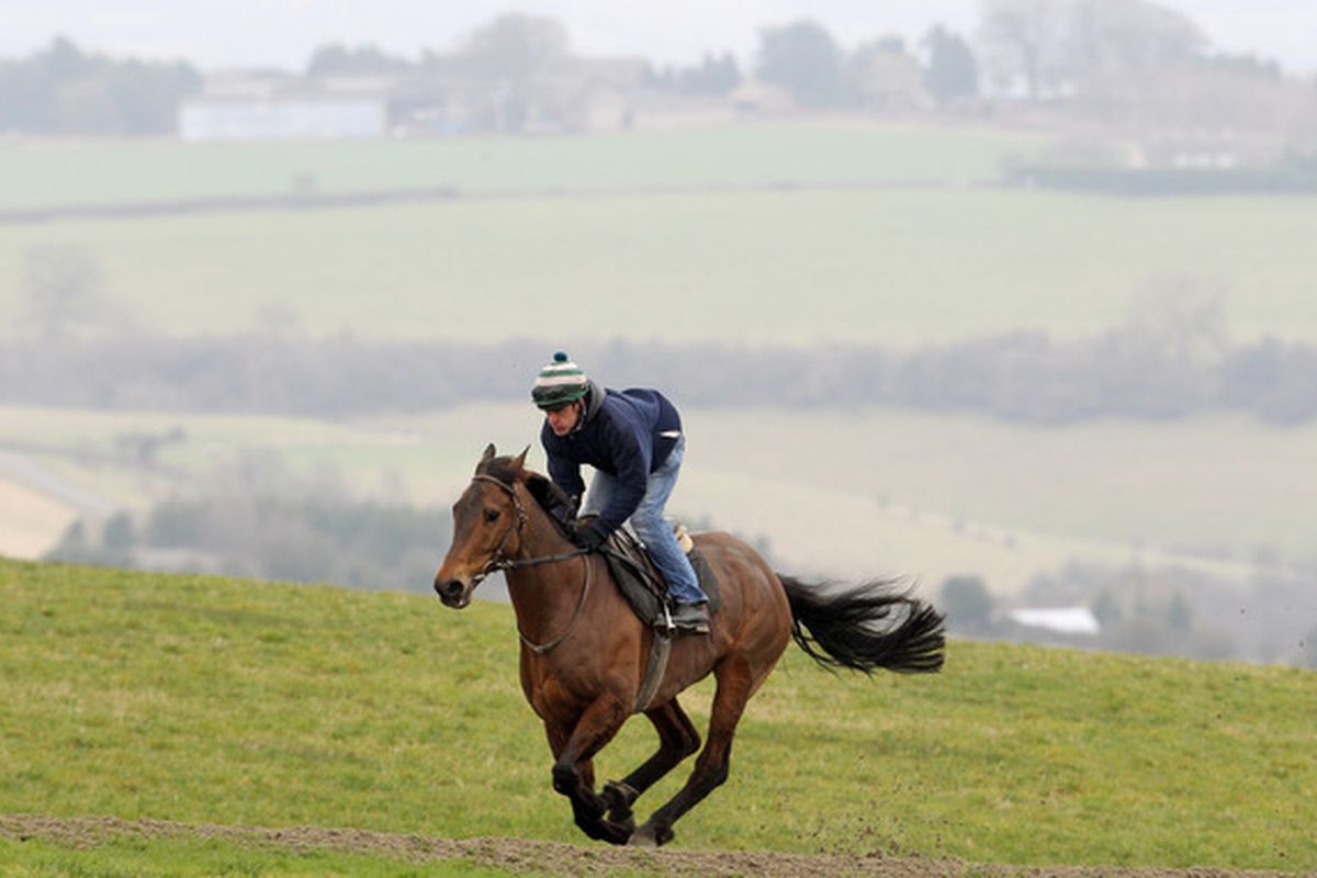 CHELTENHAM, ENGLAND - MARCH 01:  Imperial Commander ridden by head lad Sparky Bevis on the gallops on March 1, 2011 in Cheltenham, England.  (Photo by Scott Heavey/Getty Images)