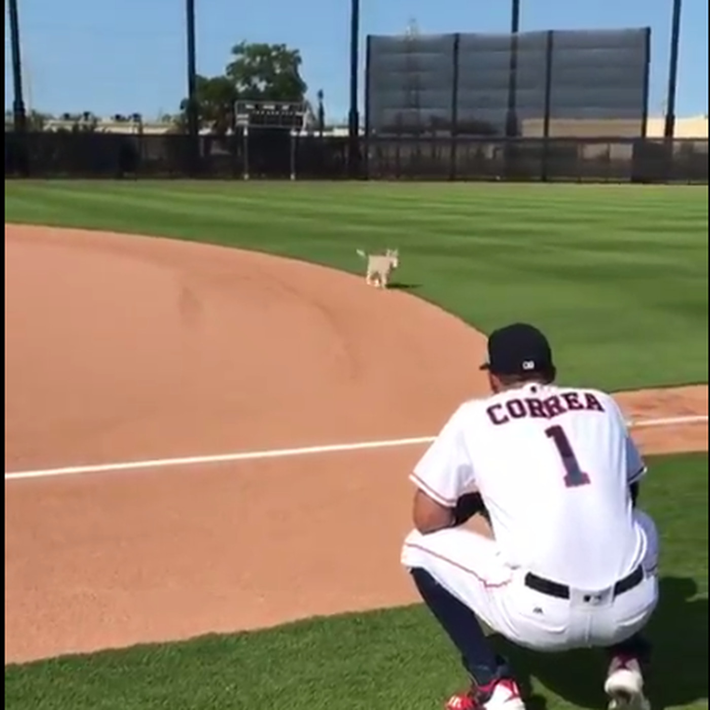 wholesale dealer 062fa 0904d Carlos Correa's puppy named Groot helped him practice at ...