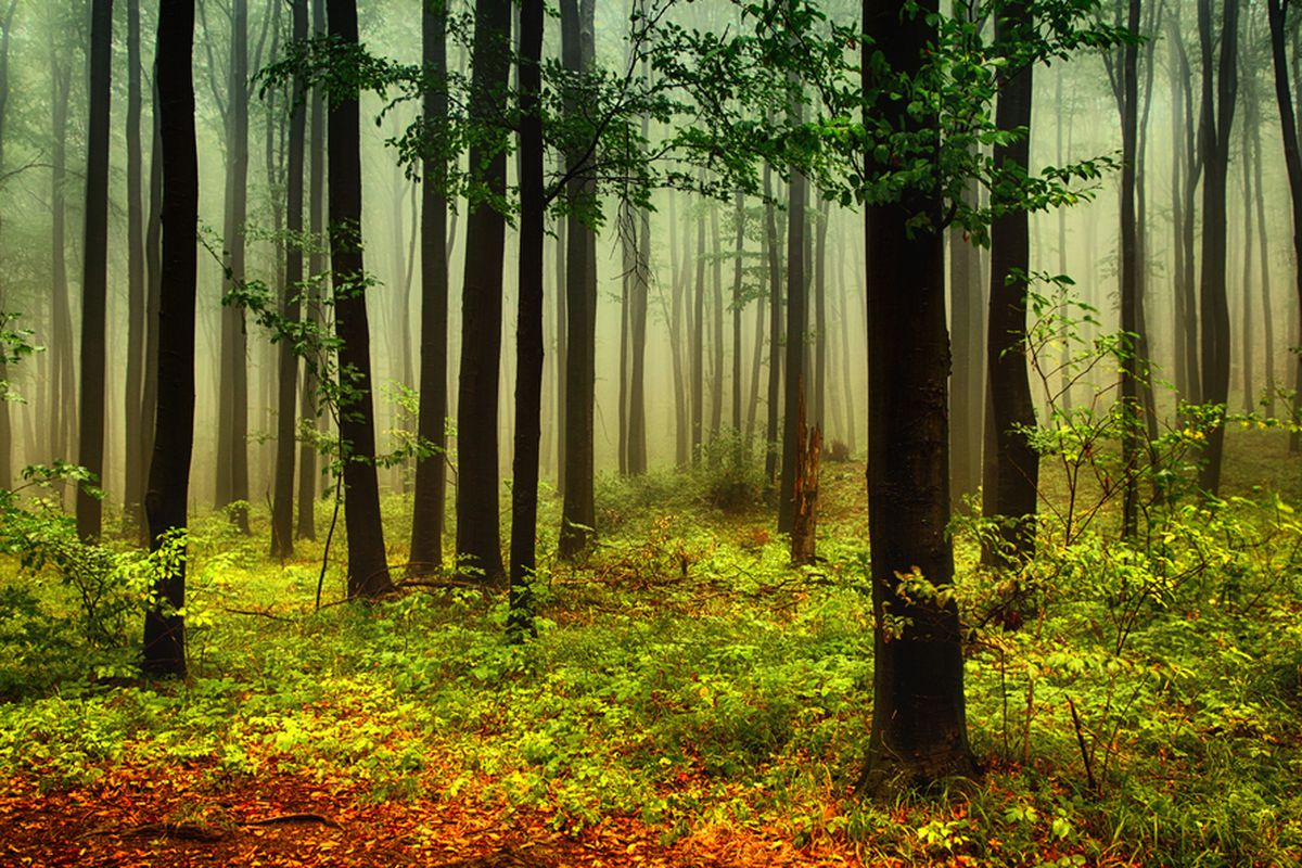 Not the forest in question. Photo: Shutterstock.