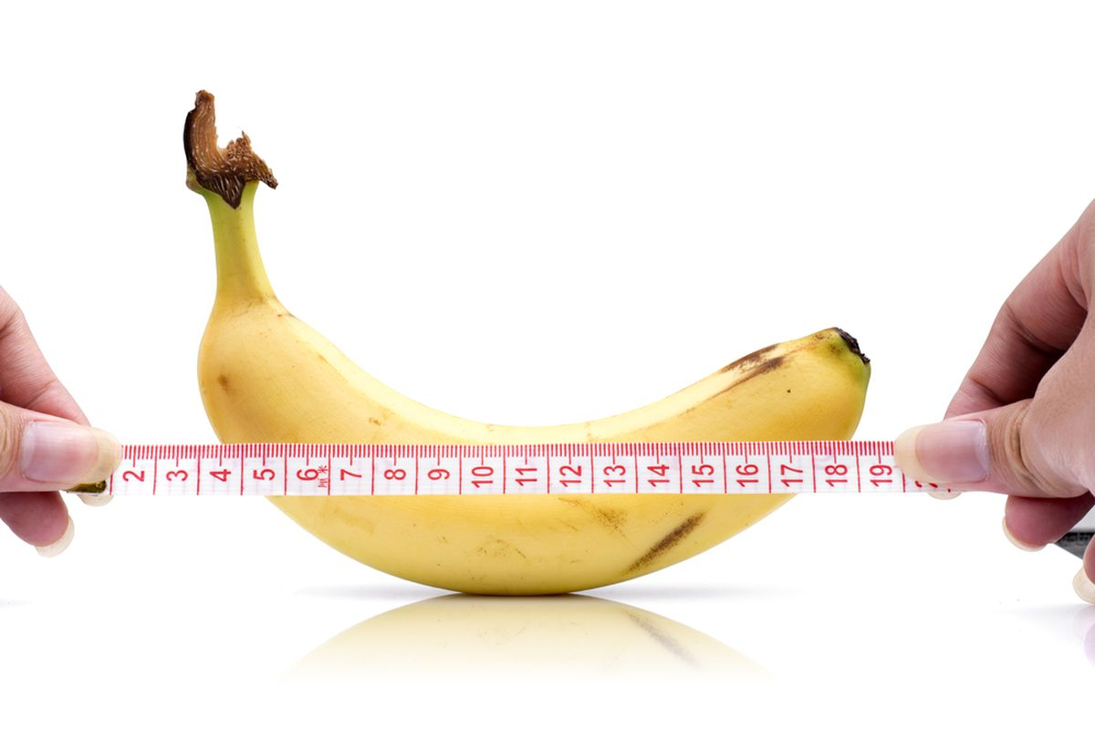 typical penis size