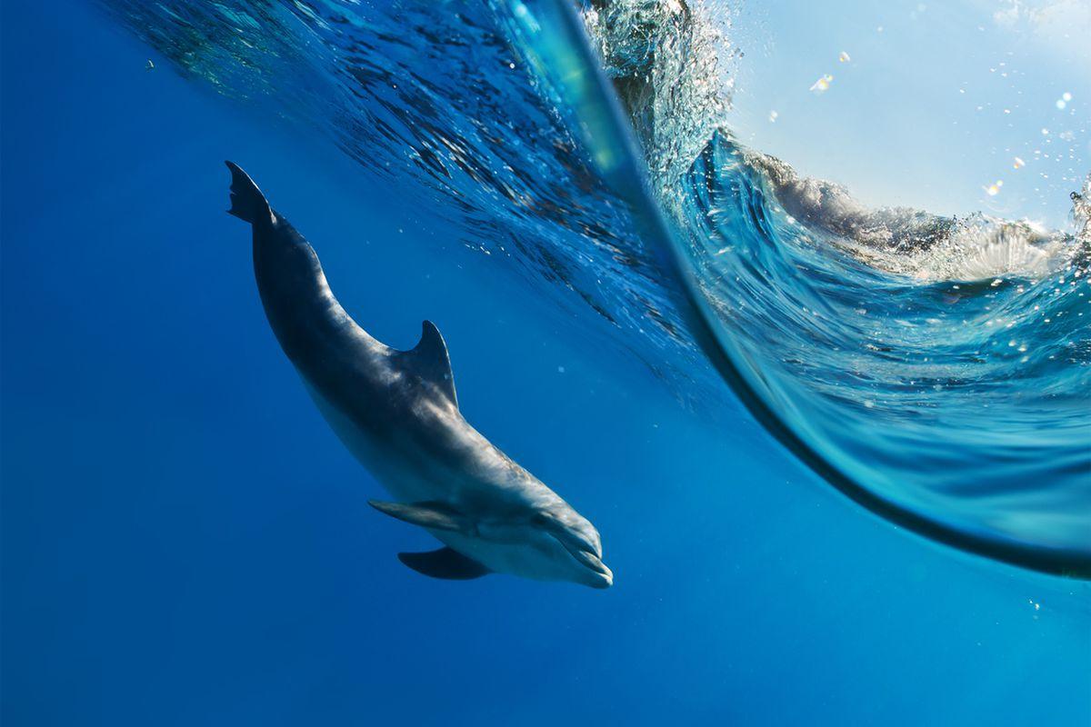 SHUTTERSTOCK dolphins