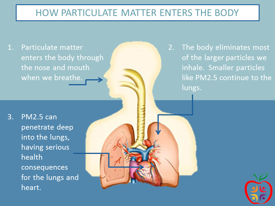 A diagram of how particulate matter is inhaled and has negative effects on a person's body.