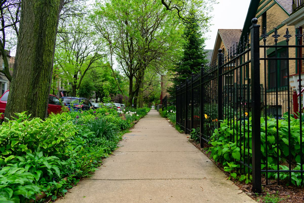 A sidewalk with a leafy parkway and green trees. The homes have a black iron fence in front of the lawn.