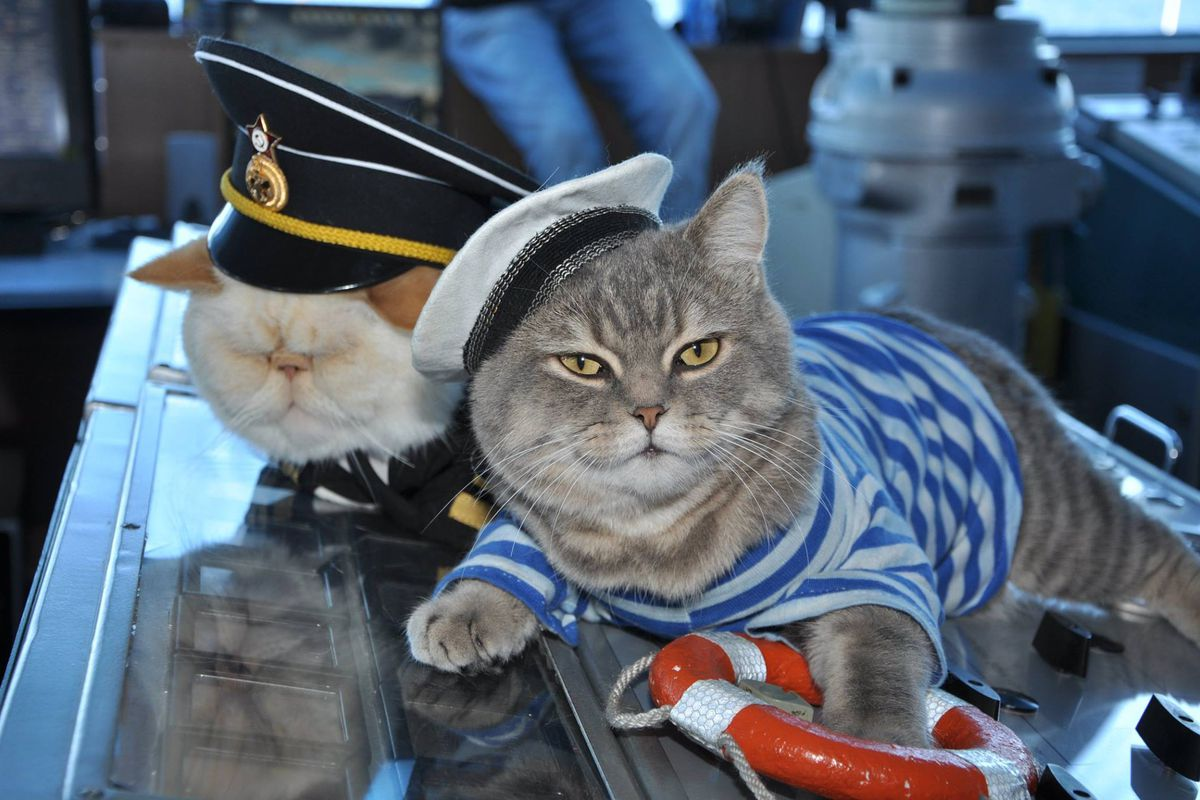 Meet The Cat Captain And First Mouser Of Your Russian River Cruise - Cat dressed in tiny sailors outfit becomes captain of russian cruise ship