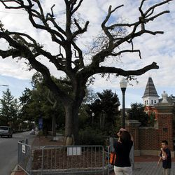 Teresa Weimer and Christian Weimer, of Ormond Beach, Fla. takes a photo of the Live Oaks before the game on Saturday, Sept. 15, 2012, in Auburn, Ala.  Harvey Updyke, 63, is charged with spiking the majestic oaks with a potent herbicide during Auburn's national championship run in the 2010 football season, which included a 28-27 win over Alabama. The trees are a powerful symbol because Auburn football fans traditionally roll them with toilet paper after a victory. Updyke has pleaded not guilty by reason of mental disease or defect to charges that include criminal mischief and desecrating a venerable object.