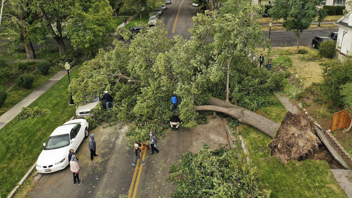 Volunteers remove a tree blocking a street in the Avenues in Salt Lake City on Tuesday, Sept. 8, 2020.