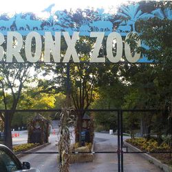 The ticket booths are empty and the gates are chained shut at an entrance to the Bronx Zoo in New York, Friday, Sept. 21, 2012. Zoo officials say a visitor who leaped into an exhibit and was mauled by a tiger was alone with the 400-pound beast for about 10 minutes before being rescued.