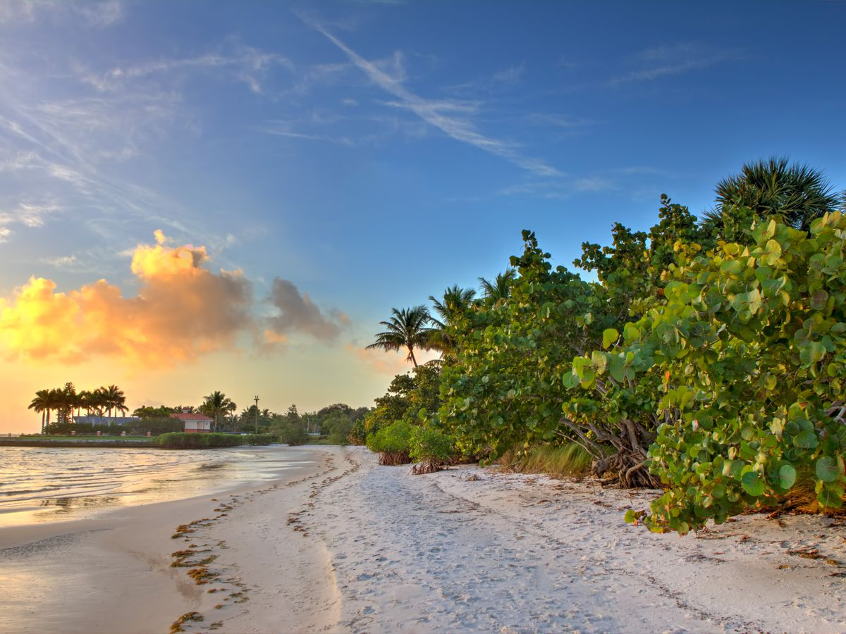 A sandy beach against the ocean. There are trees that line the beach. There is a sunset and the sky is orange and blue.
