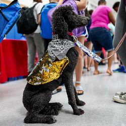 Amara Shippee, 15, stands with her service dog, Missy, a standard poodle, while picking out free school supplies during Operation Homefront's annual Back-to-School Brigade event at Hill Field Elementary in Clearfield on Tuesday, Aug. 13, 2019.