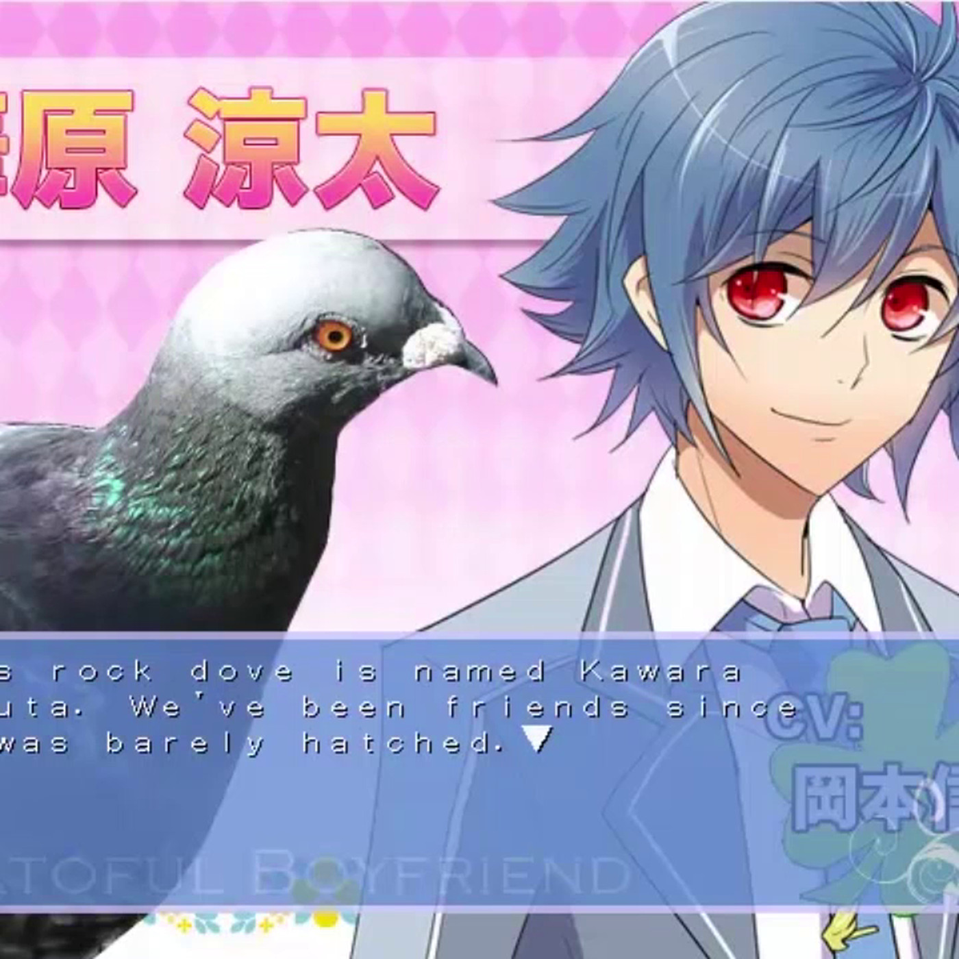 pigeon dating vn)