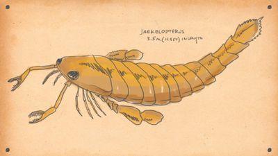 SeaScorpion - Here are 9 of the most badass animals ever to swim