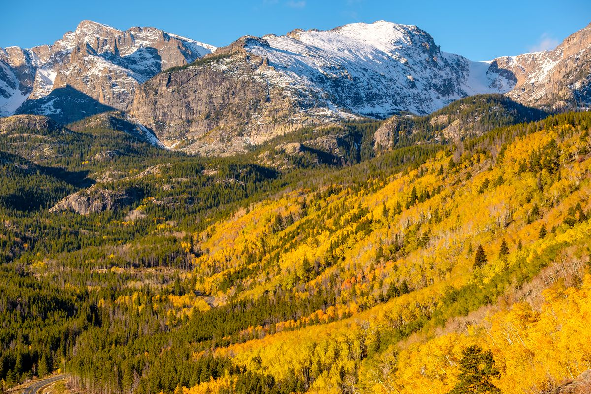 In the foreground are aspen trees with colorful yellow leaves in the aspen grove in Rocky Mountain National Park.
