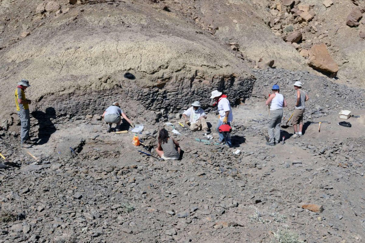 A new species of dinosaur dubbed the King of Gore was disovered at the Grand Staircase-Escalante National Monument in Utah and was announced Wednesday at the Natural History Museum of Utah.  A section of Jones Hole Creek in Dinosaur National Monument that