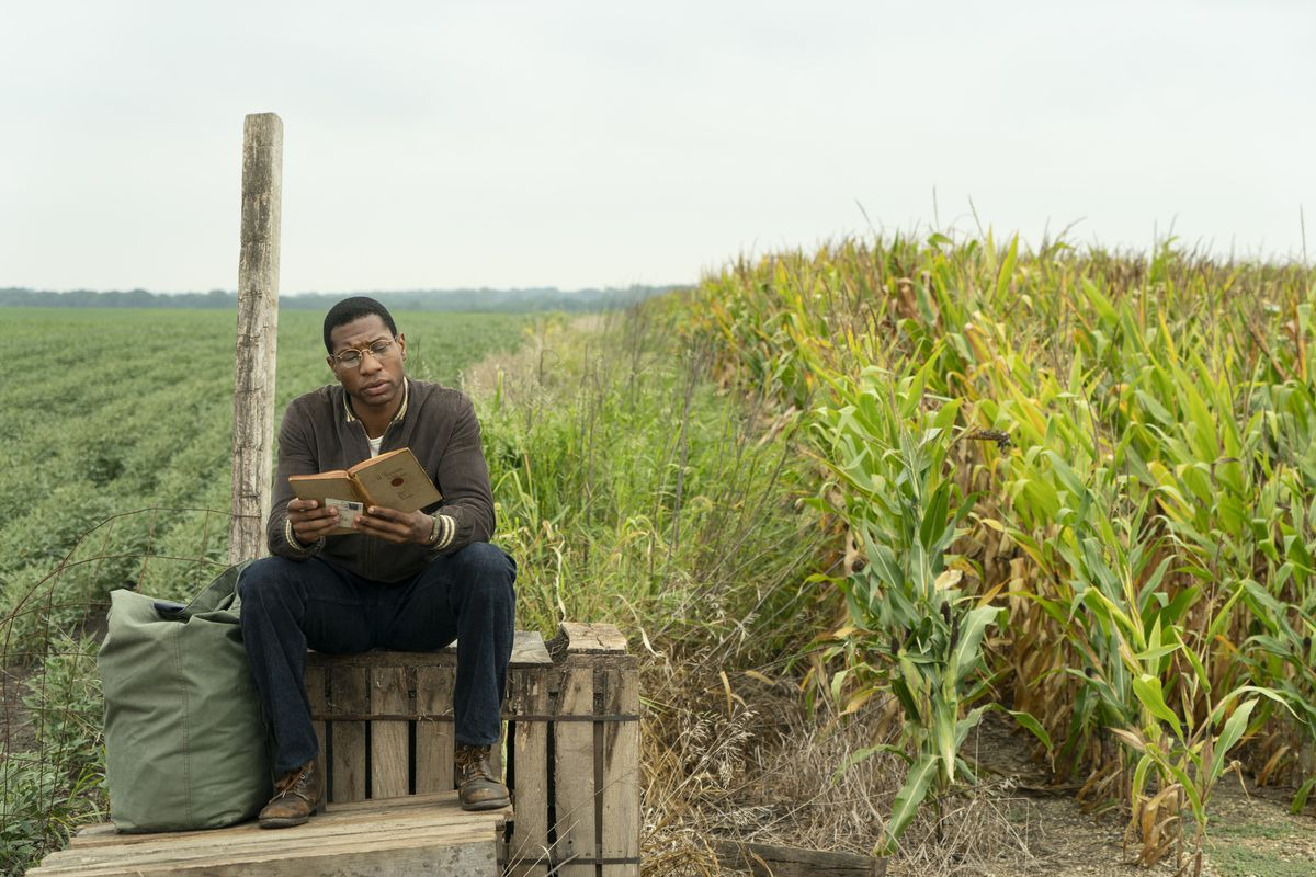 A man sits on a rustic bus stop bench reading beside a cornfield.