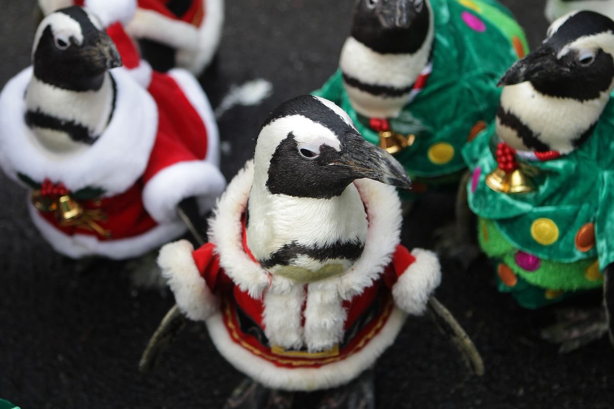 Penguins Dress As Santa Claus At Everland