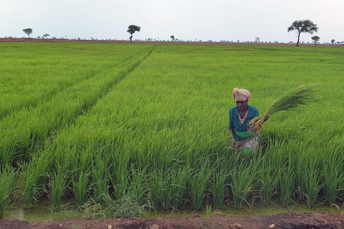 China promotes transfer of farmland use right - China ...  |China Farmland