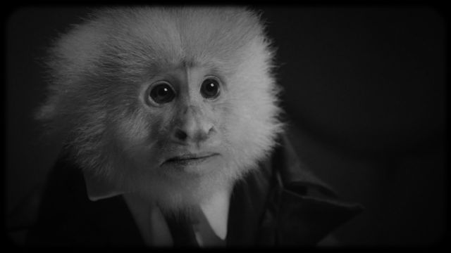 a close-up of a capuchin monkey wearing a suit in the black-and-white short film What Did Jack Do?