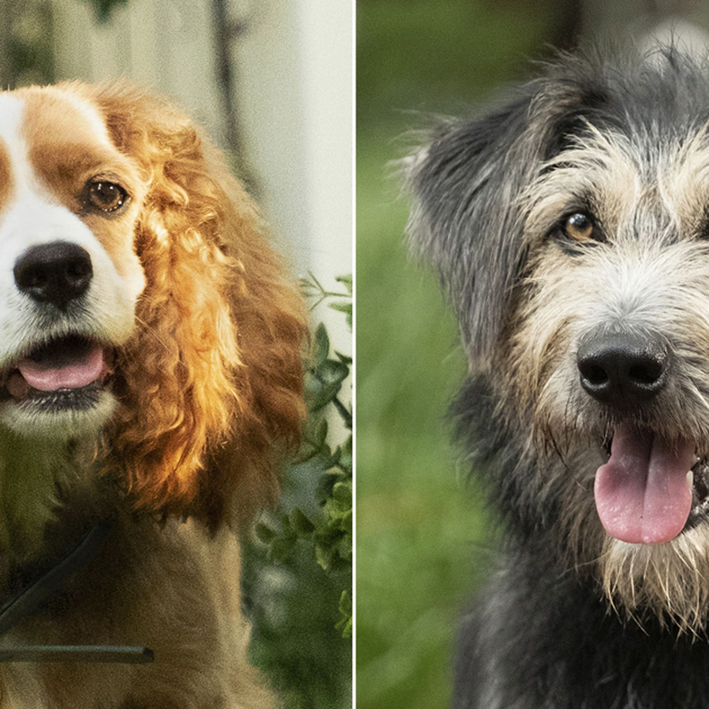Lady And The Tramp Remake Here S What The Disney Movie S Canine Stars Look Like Deseret News