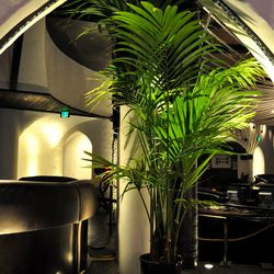 Ferns decorate the space.