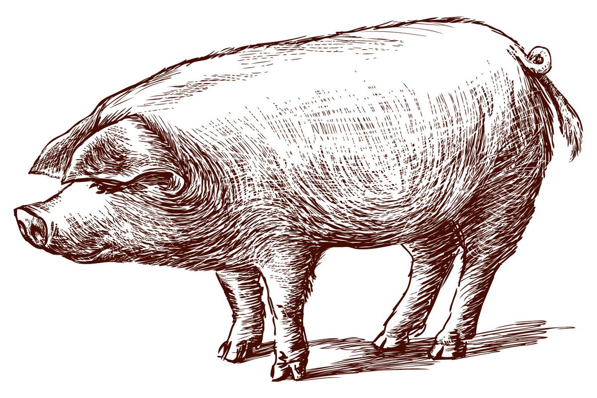 Lardo comes from the pig's back.