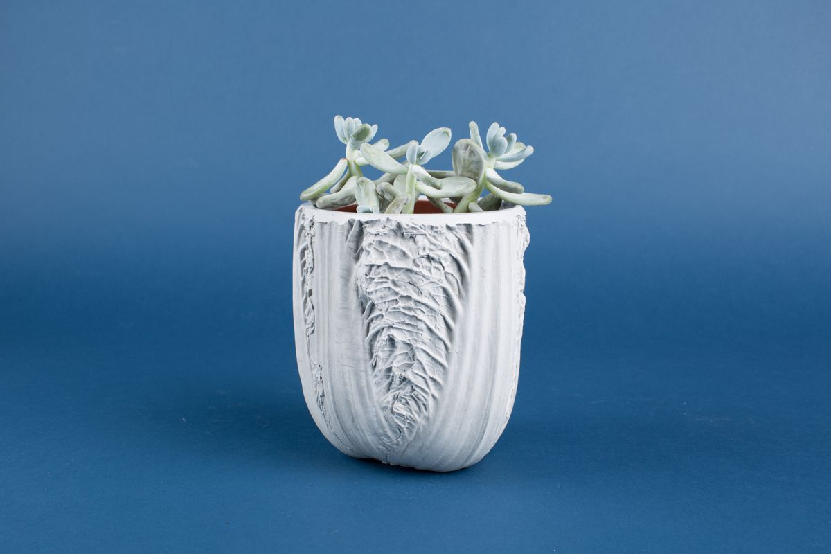 Succulent in cabbage-shaped planter