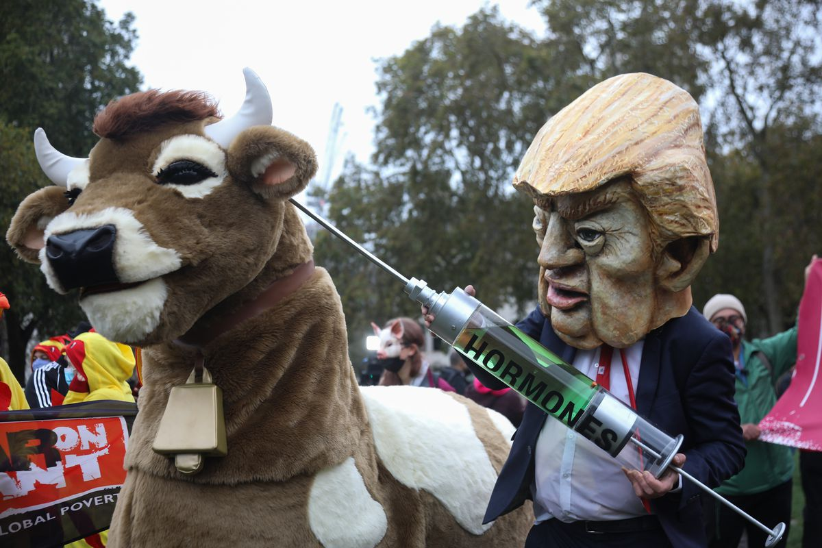 A Donald Trump costumed-figure fakes injecting a costumed cow with hormones outside Parliament Square