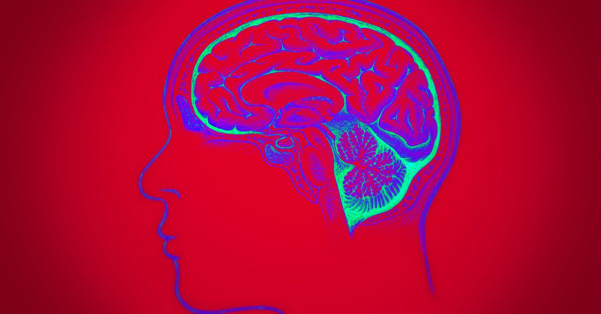 Why do humans have such huge brains? Scientists have a few ...