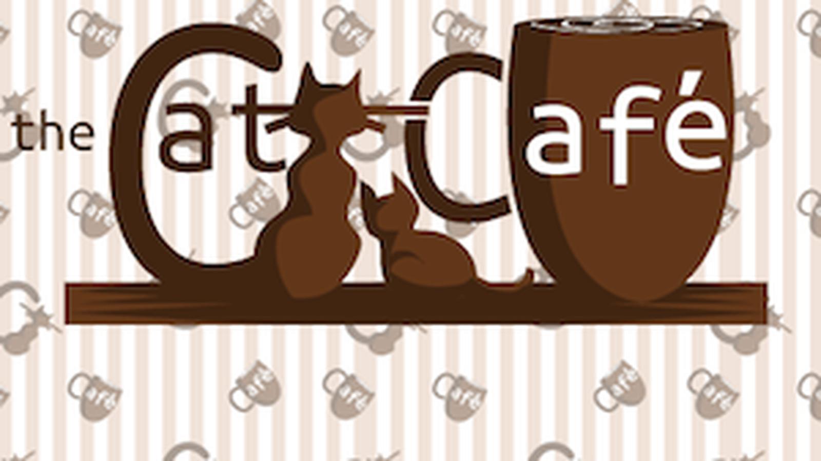 Tony Wang Cat Cafe