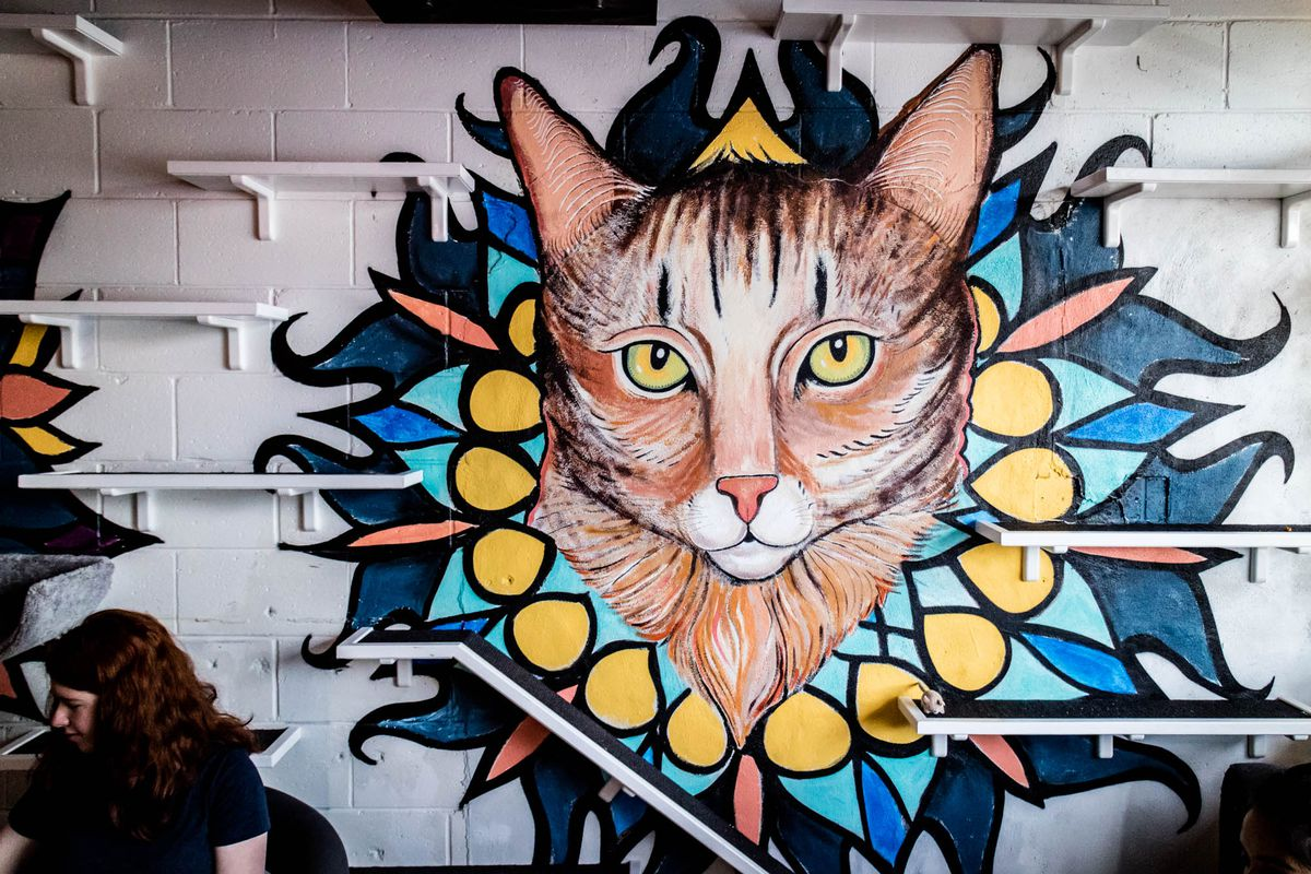 A mural of a cat at Java Cats Cafe
