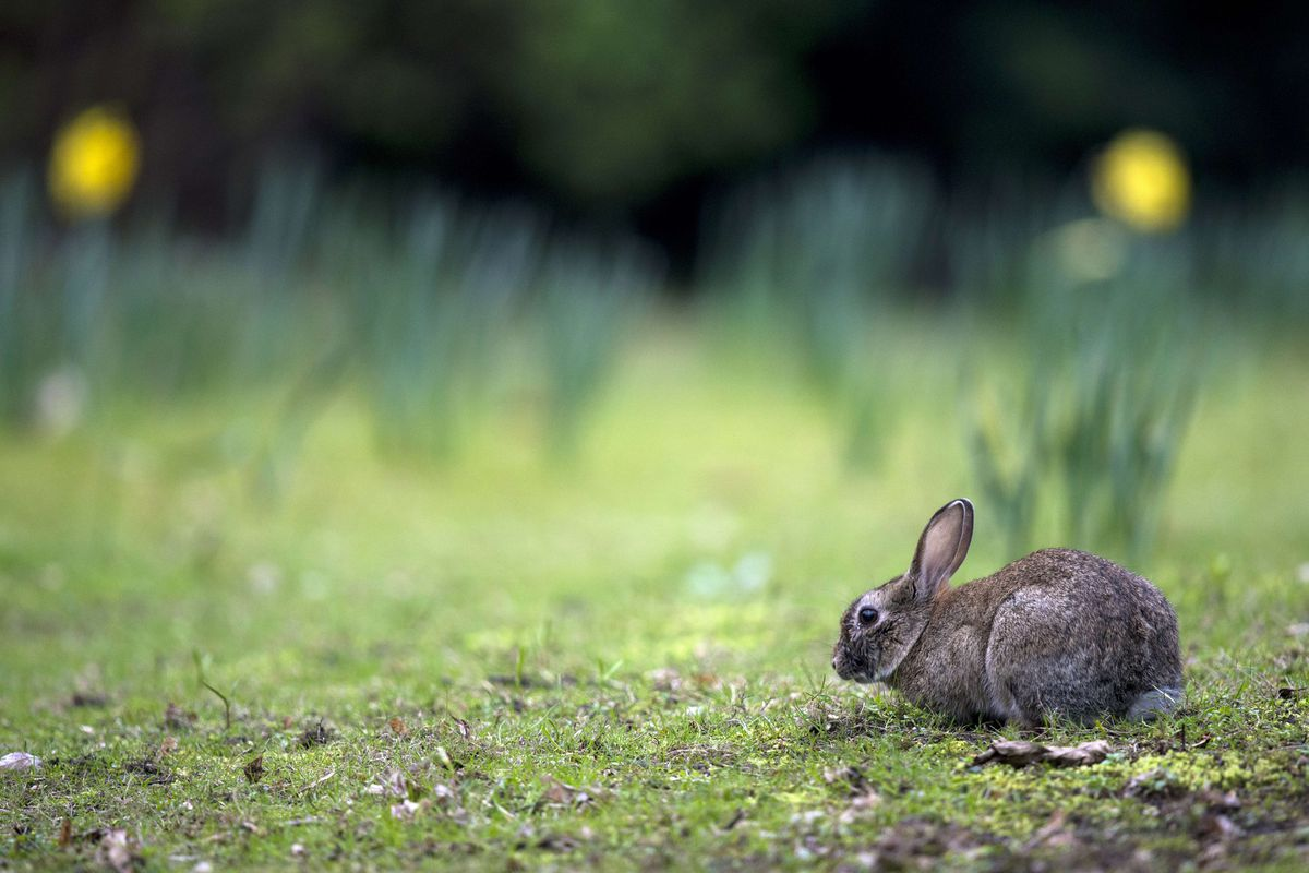 Is Easter About Jesus Or Bunnies Both Actually Vox
