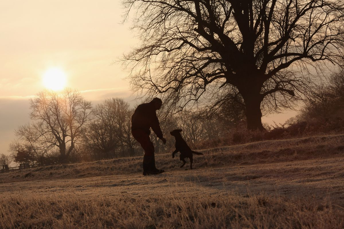 Early Morning Frost Is Seen over Richmond Park