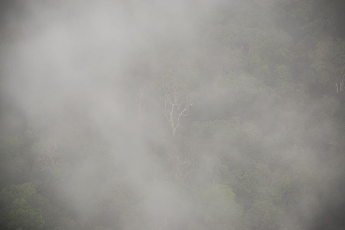 Mist rises above trees in the Amazon rainforest.