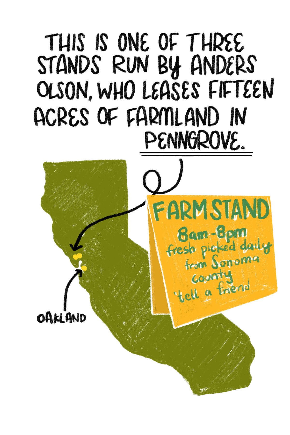 """""""This is one of three stands run by Anders Olson, who leases 15 acres of farmland in Penngrove. [Superimposed over an illustration of the state of California, a yellow sign that reads """"Farm stand, 8am - 8pm, fresh picked daily from Sonoma county; tell a friend.""""]"""