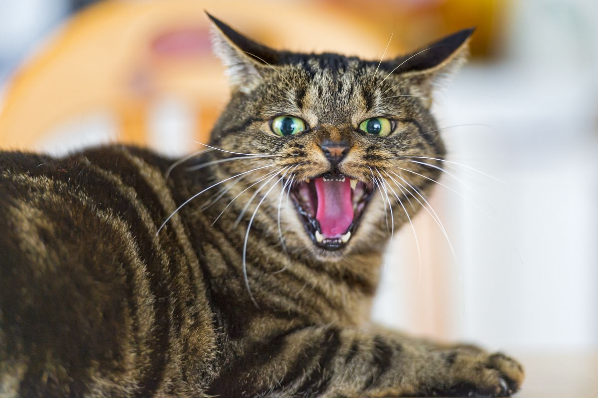 What research says about cats: they're selfish, unfeeling