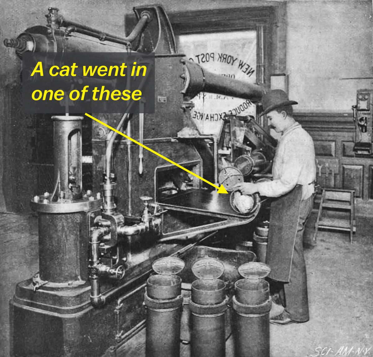 Yes, a cat was sent through a pneumatic tube. It was for its own good.