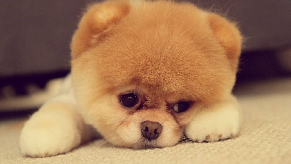 Wilmer Flores Dog