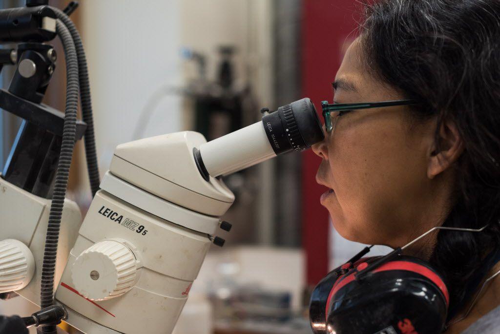 Akiko Shinya works on cleaning Cryolophosaurus bones found in Antarctica.